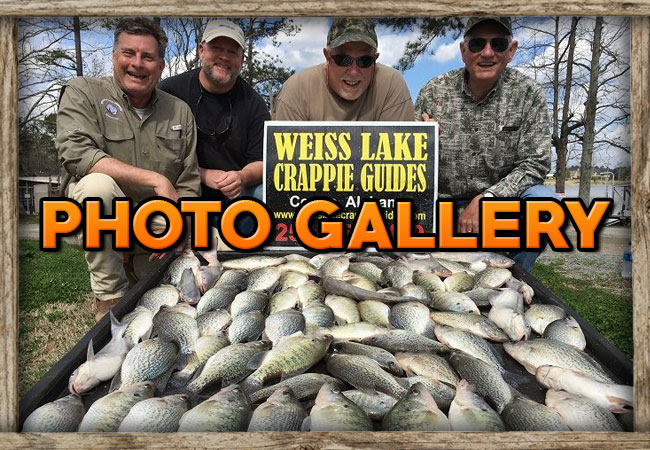 Weiss Lake Crappie Guides Photo Galleries