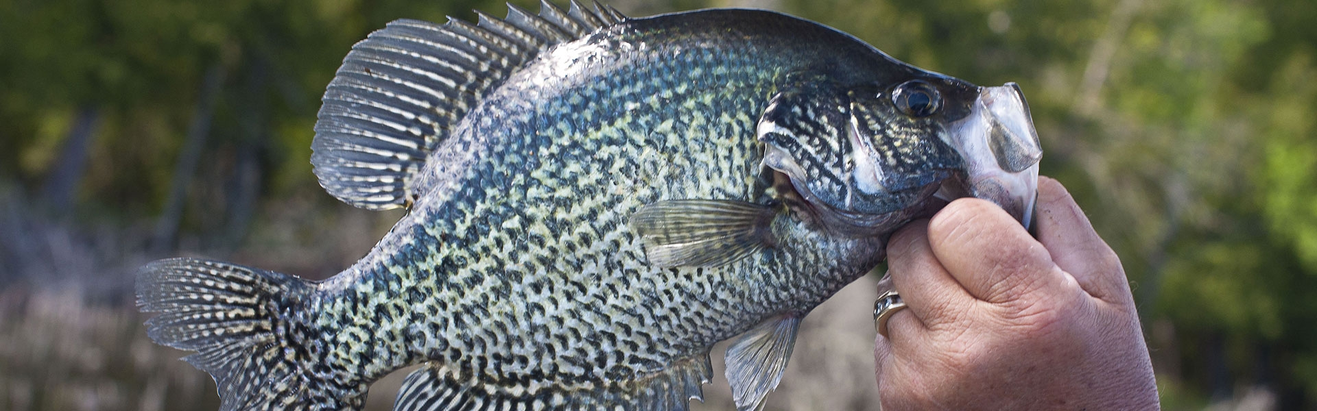 Weiss Lake Crappie Fishing Report