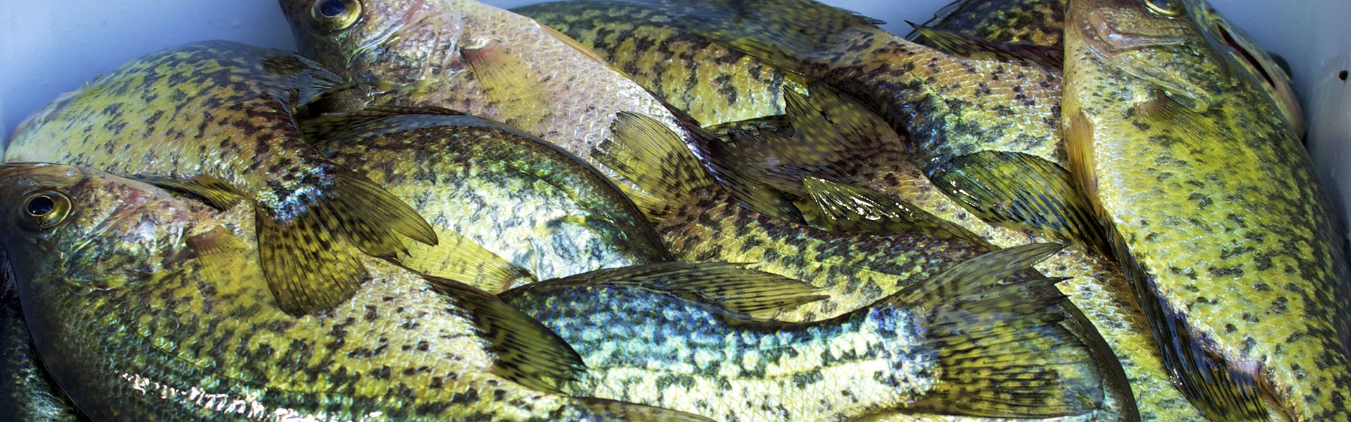 About Weiss Lake Crappie Guides